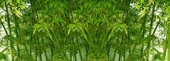 Motiv Bambuswald